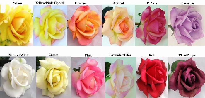 related keywords suggestions for natural rose colors